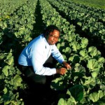 Zimbabweans make thriving farm on abandoned land