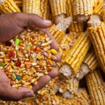 White farmers poisoning the nation for profits
